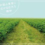 【Vol.93】オーガニックコットンの先を行く、 益久染織研究所の手紡ぎ糸